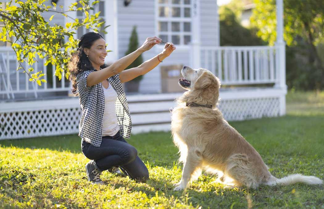 Woman training her golden retriever