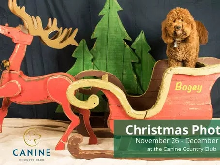 dog in Canine Country Club Christmas photo